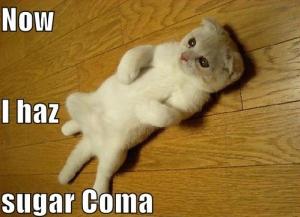 sugar-coma-cat